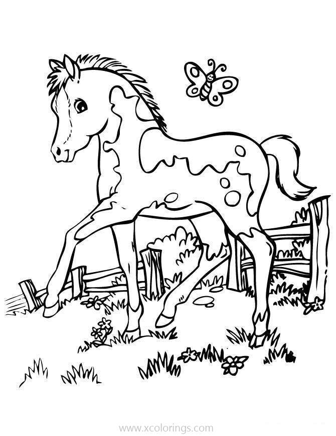 Baby Horse On The Farm Coloring Pages Xcolorings Com
