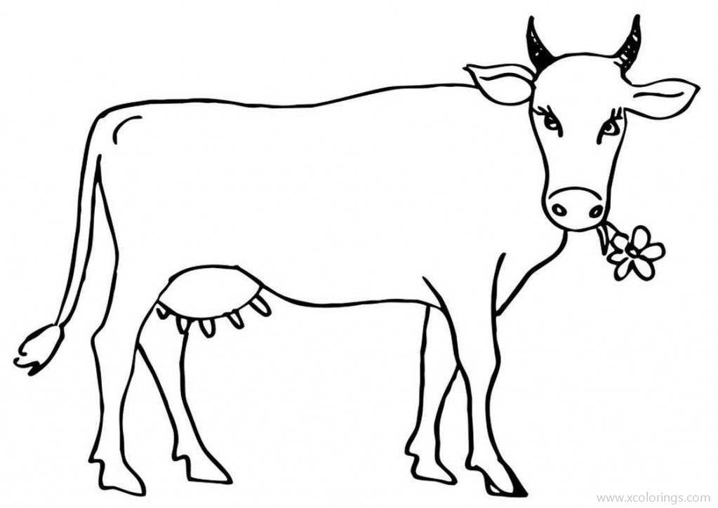 Cow Coloring Page Cattle With Flower Xcolorings Com