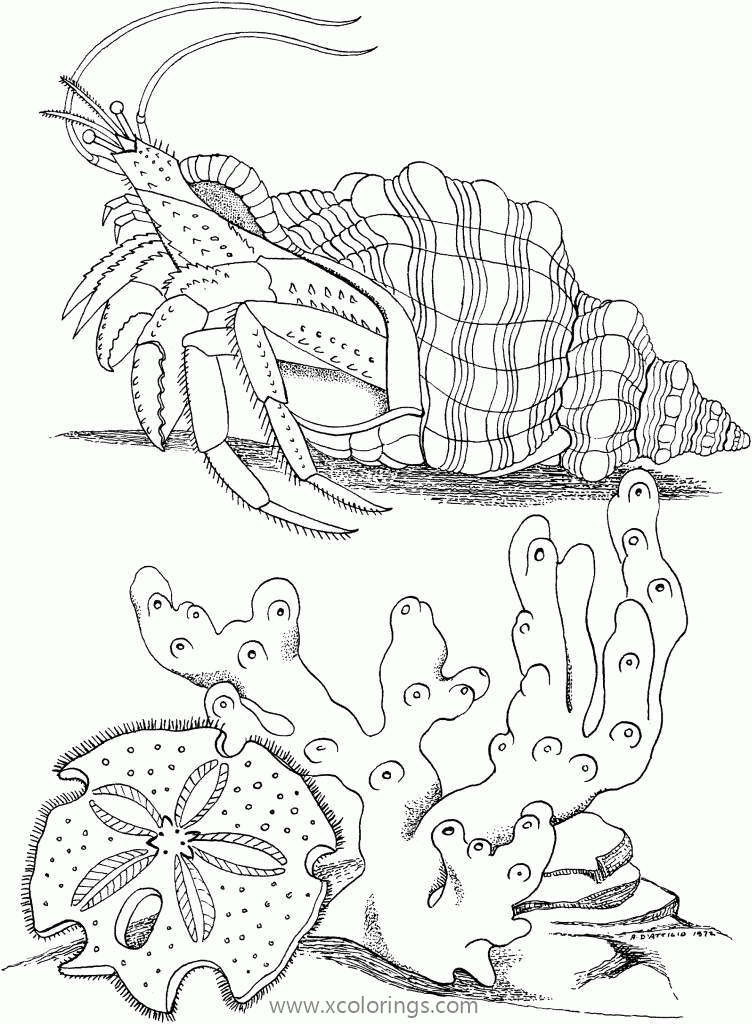 Hermit Crab Coloring Page With Coral - XColorings.com