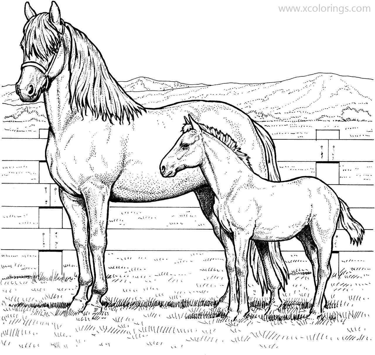 Realistic Baby Horses Coloring Pages Xcolorings Com